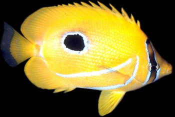 Fish have similar organs of perception to our own. But, in their own damain,  their organs of perception are far superior to ours - until we add technological filters like face masks, sonar, and underwater lights.© http://www.thread-of-awareness-in-chaos.com/order.html