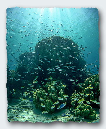 Coral reefs depend on the populations of fish to provide phosphates and nitrates. Click for more information. © http://www.thread-of-awareness-in-chaos.com/order.html
