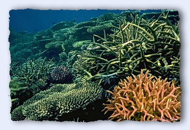 Reef corals would not look the way they do, or exist at all, without the zooxanthellae. © http://www.thread-of-awareness-in-chaos.com/order.html
