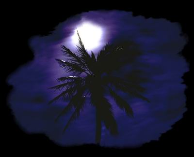 A coconut palm tree backlit by the moon in Fiji. © http://www.thread-of-awareness-in-chaos.com/order.html